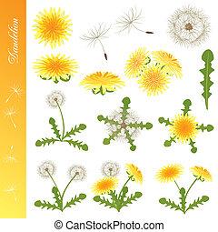 Dandelion Icons Set - Illustration vector