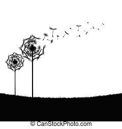 dandelion illustration in nature
