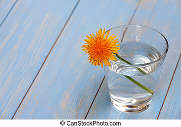 dandelion in a glass with water