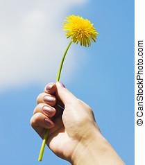 dandelion in his hand
