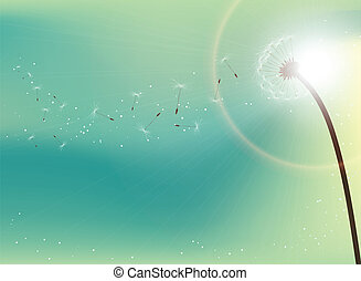 Dandelion in sunlight - Flying dandelion seeds in direct...