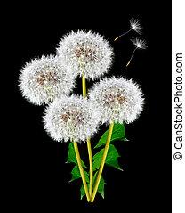 Dandelion on a black background