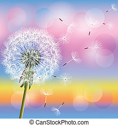 Dandelion on background of sunset, vector - Flower dandelion...