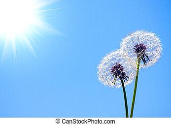 Dandelion on blue sky