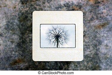 Dandelion on slide film