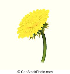 Dandelion on stem, closeup isolated. Large yellow flower on green stem. Vector illustration