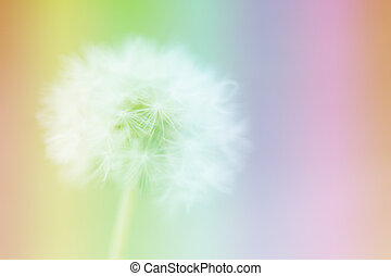Dandelion on the abstract colorful blur background.