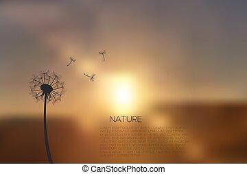 dandelion, pôr do sol, ilustração, borrão