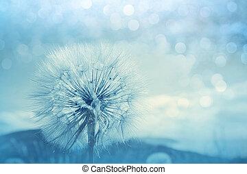 Dandelion - Close up shot of dandelion