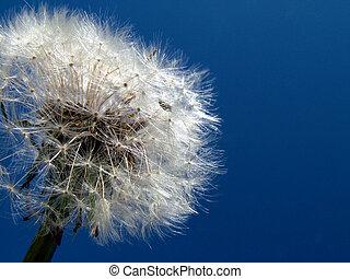 Dandelion in sky