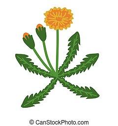 Dandelion plant illustration