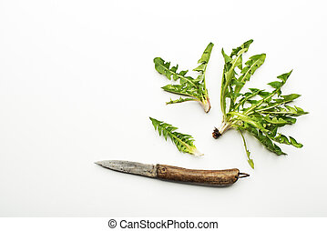 Dandelion salad - Fresh dandelion leaves on white background...