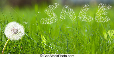 Dandelion seed in form a sale sign