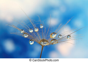 dandelion seed with drops of water against the sky