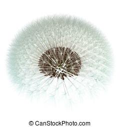 Dandelion Seeds, 3d Generated - Fibonacci Sequence Experiment