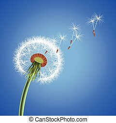 Dandelion seeds blowing away vector background