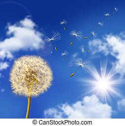 Dandelion seeds blowing in the wind against blue sky