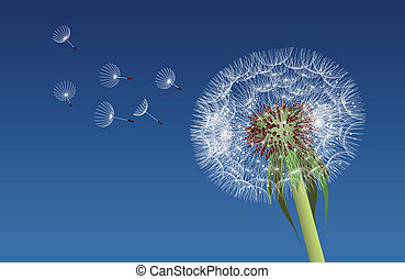 Dandelion seeds blown in the blue sky. Vector illustration