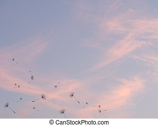 Dandelion seeds fly out against pink sunset sky background.