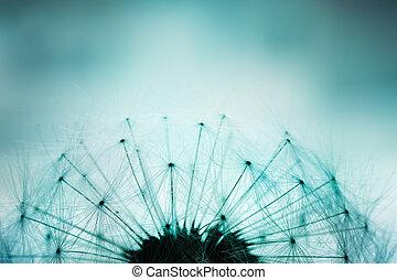 Dandelion seeds - Extreme macro shot of fluffy dandelion...