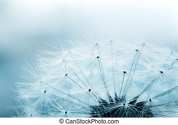 Dandelion seeds - Extreme macro shot of fluffy dandelion...