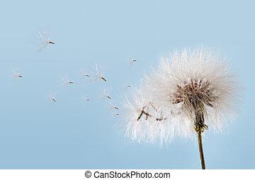 Dandelion flying against a soft blue sky.