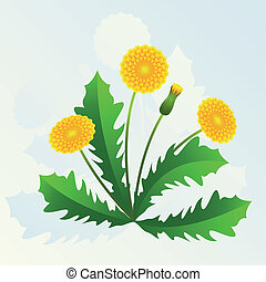 Summer background with yellow dandelions and green leaves.