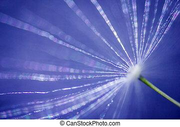 dandelion under the microscope