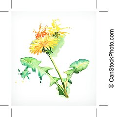 Dandelion, vector illustration - Watercolor painting,...