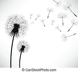 dandelion, vento, sopro, flor