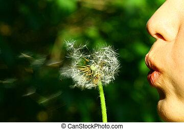 dandelion wish - wish girl blow on dandelion flower