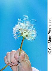 dandelion wishing blowing seeds