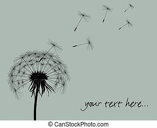 Dandelion with place for your text