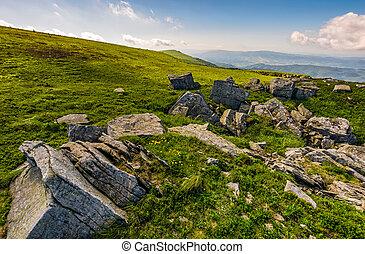 Dandelions among the rocks in Carpathian Alps - Dandelions...