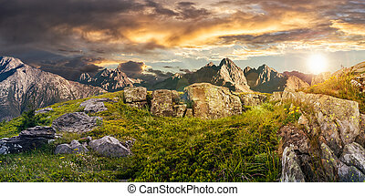 Dandelions among the rocks in High Tatra mountains -...