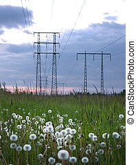 Dandelions and electricity pylons - Field of dandelions with...