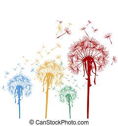dandelions, colorido