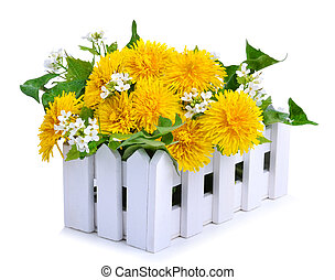 Dandelions decoration in the white fence isolated