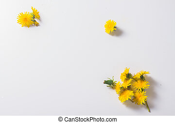 Dandelions flowers flat lay scene on white with copy space