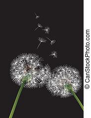 dandelions, fundo, dois, pretas