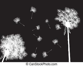 Dandelions in the night, desktop background