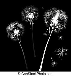 dandelions in wind
