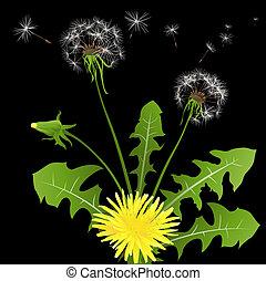 dandelions in wind on dark background