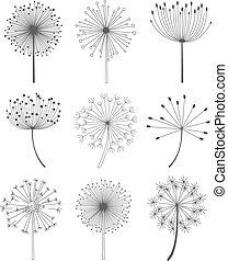 dandelions, jogo, ilustração, vetorial, pretas, branca