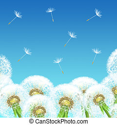 dandelions on a background of blue sky