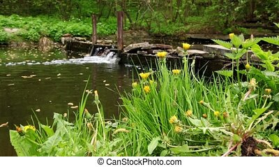 Dandelions on green grass at background of small waterfall
