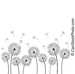 dandelions, planta, vetorial