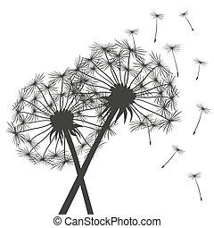 dandelions, pretas