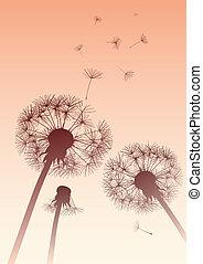 dandelions, sepia