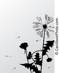 Dandelions silhouettes